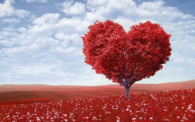 san-valentin-romantico-vivelibro